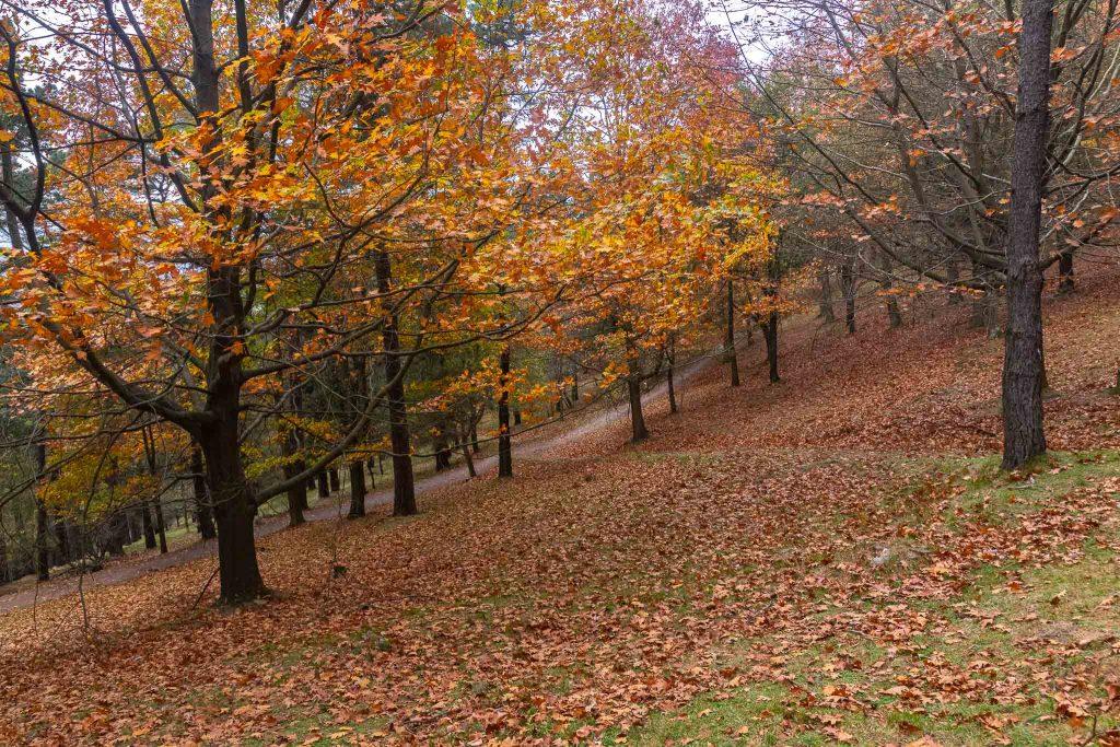 Mi Camino (Pagasarri) - Imagen de Mikel DLM Fotografía